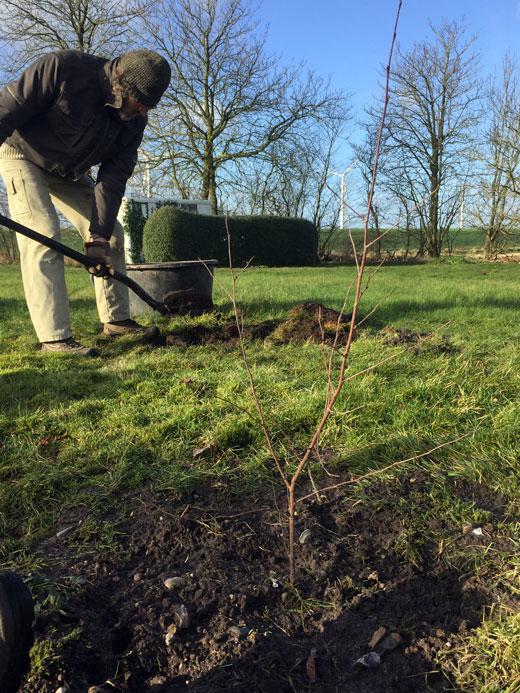 Vi planter en skov hos Joyful Living