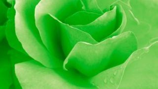 Grøn rose hjerte chakra